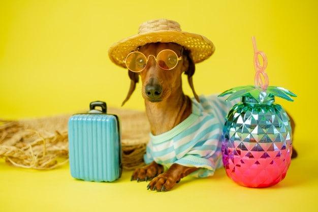 Regole per non estinguersi d'estate 1